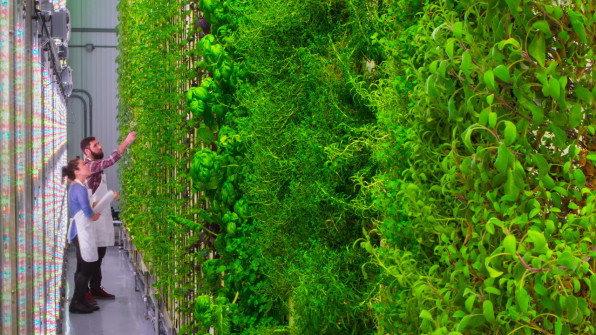4-c-meet-the-silicon-valley-vertical-farming-startup